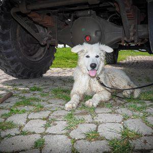 Eine aus guten Gründen geknickte Hundeschule, das Widahi-Fieber und eine Begegnung der dritten Art…