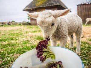 Veganismus: Sobald Opfer im Spiel sind, ist es nie eine persönliche Entscheidung!