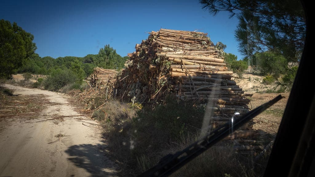 Holzstapel am Stausee Montargil