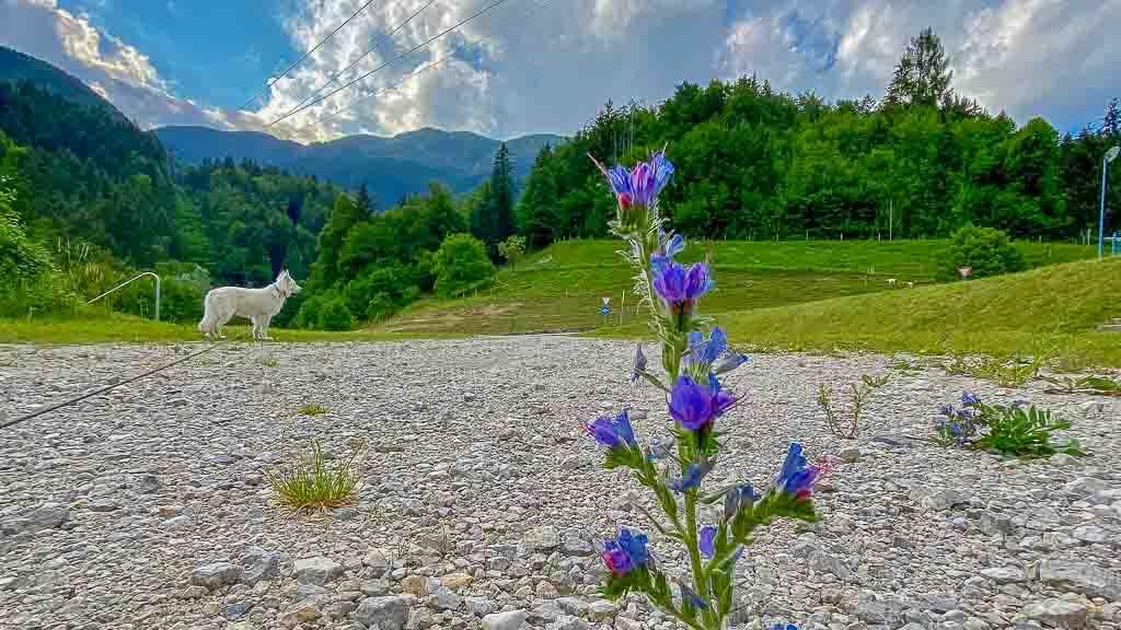 Quer durch Europa 06 Slowenien Black Pearl und Allzeit-Bereift