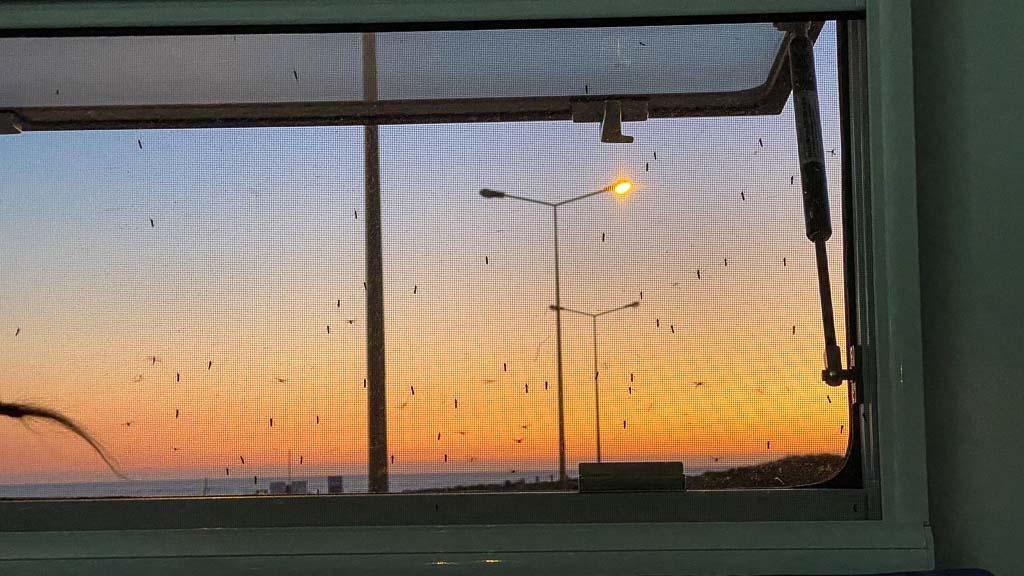 Mücken am Fliegengitter begehren Einlass