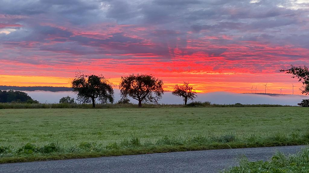 Abendrot mit Bäumen im Hintergrund beim Roadtrip Normandie