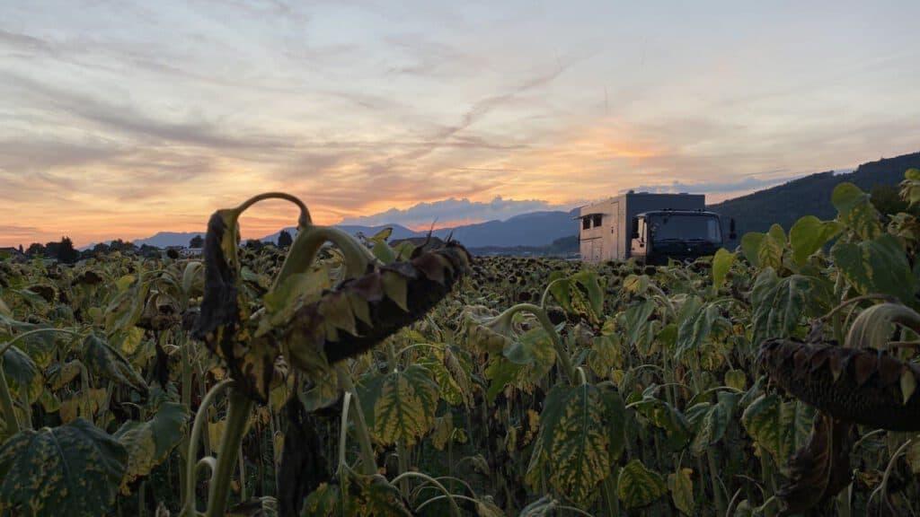 Sonnenblumenfeld im Vordergrund MB1222AF im Hintergrund